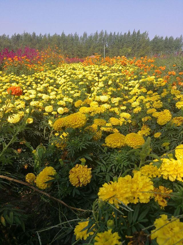 진주 꽃밭