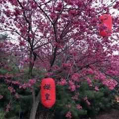 桂陽櫻花園用戶圖片