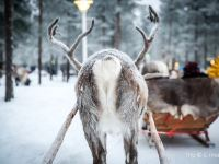 Rovaniemi: Santa's Home on the Arctic Circle