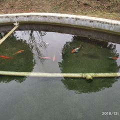 Guangxi Taiwan Flower Industrial Park User Photo