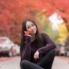 Maple Tree Square User Photo