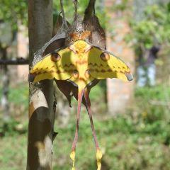 蝴蝶穀用戶圖片