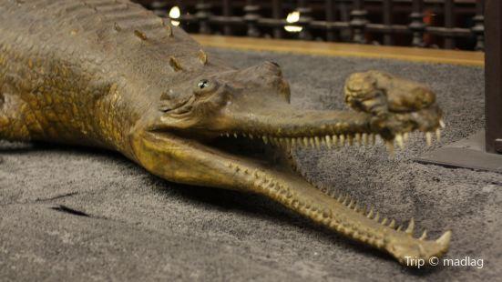 Alfredo Dugés Natural History Museum (Museo de Historia Natural Alfredo Dugés)