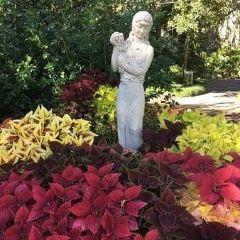 Harry P. Leu Gardens User Photo