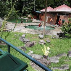 楊氏鱷魚場張用戶圖片