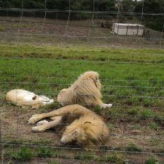 Seaview Lion Park User Photo