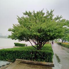 九里風景區用戶圖片
