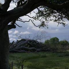The Dark Hedges User Photo