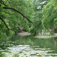 Brackenridge Park User Photo