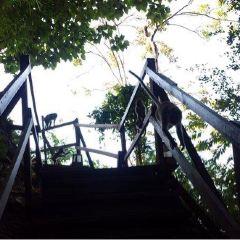 Monkey Trail用戶圖片
