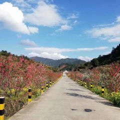 Jiufeng Town Flower Sea User Photo