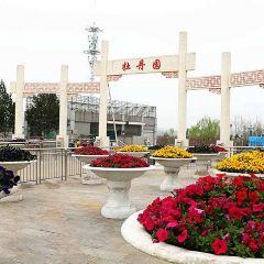 銅川牡丹園用戶圖片
