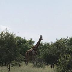 約翰內斯堡動物園用戶圖片