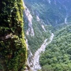 Chiaksan National Park User Photo