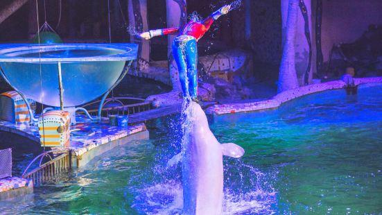 大連聖亞海洋世界海豚表演