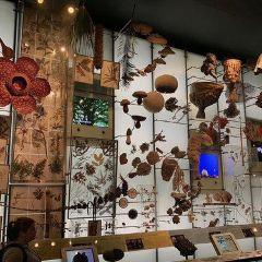 里耶卡自然歷史博物館用戶圖片