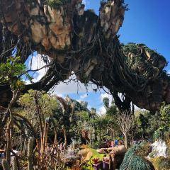 Magic Kingdom Park User Photo