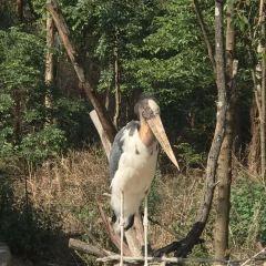 윈난성 동물원 여행 사진