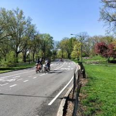 Central Park User Photo