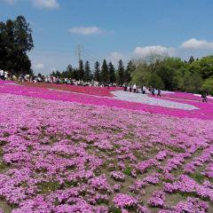 東藻琴芝櫻公園用戶圖片