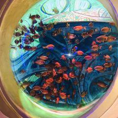 The Lost Chambers Aquarium (Sanya) User Photo