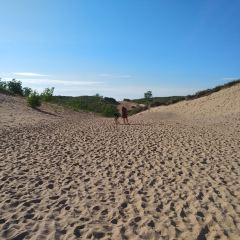 Green Point Dunes Nature Preserve用戶圖片