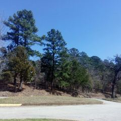 Tyler State Park用戶圖片