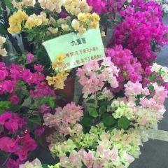 建國假日花市用戶圖片