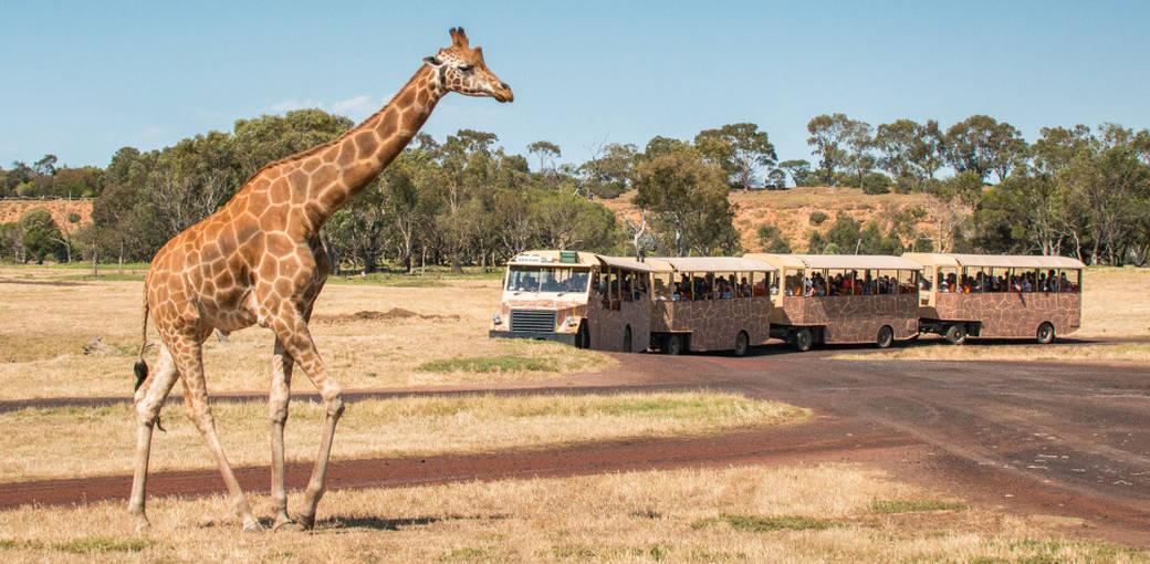 華勒比野生動物園門票