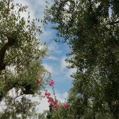 ゲッセマネ園のユーザー投稿写真
