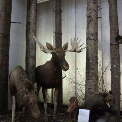 布拉戈維申斯克市地質博物館用戶圖片