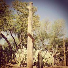 仙人掌植物園用戶圖片