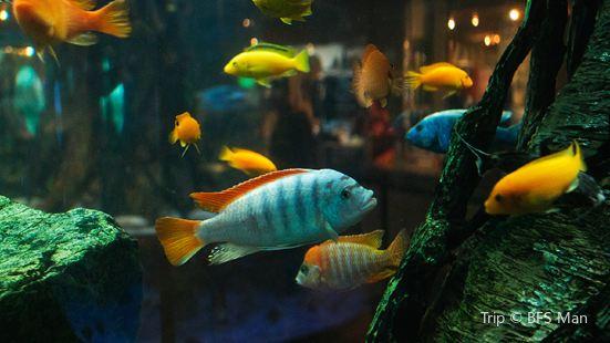 Aquarium at Rockport Harbor