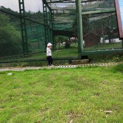 龍虎山仙寵樂園用戶圖片