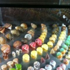 Fantasea Bali Shell Museum User Photo