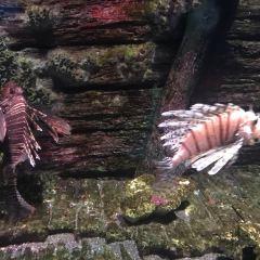 穆魯拉巴海底世界水族館用戶圖片