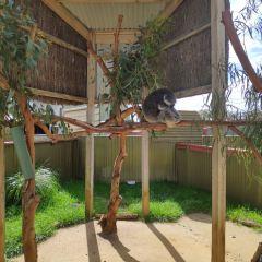 Maru Koala and Animal Park User Photo