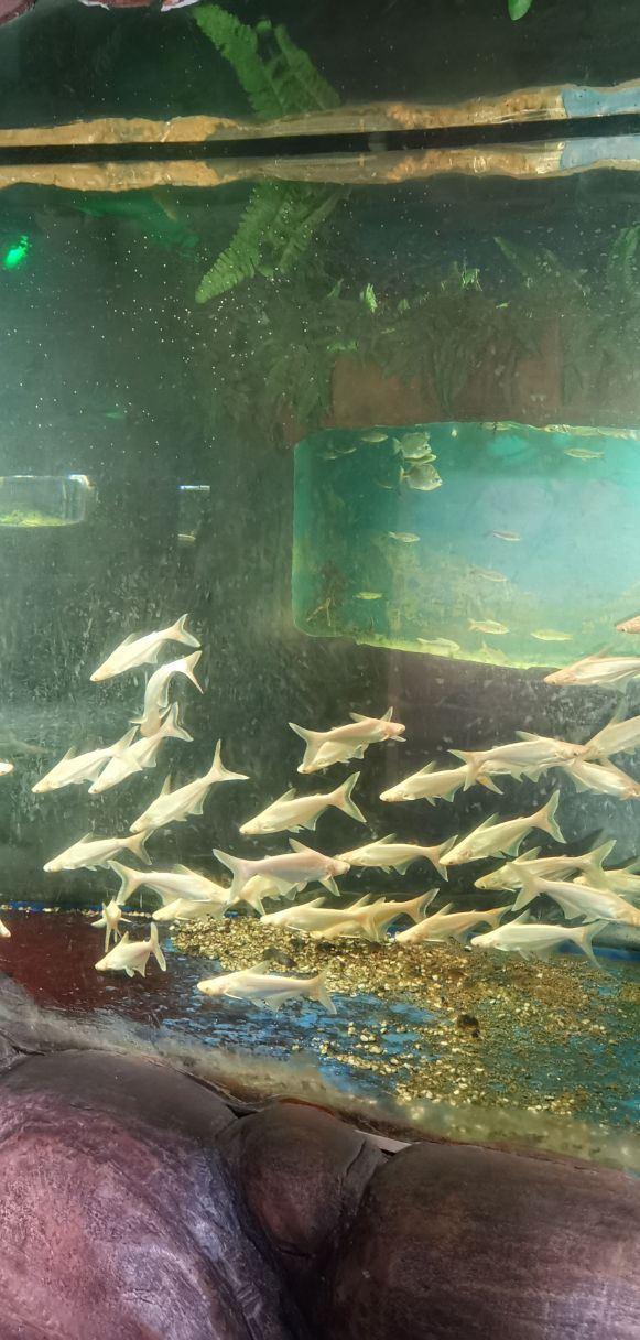 Funny Sea World