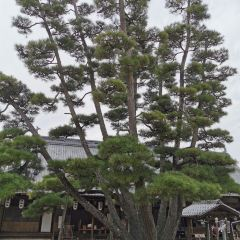 Daiganji User Photo
