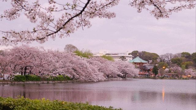 The Best Cherry Blossom Spots