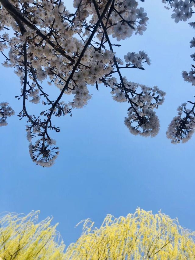 Qingdao Baihuayuan Garden