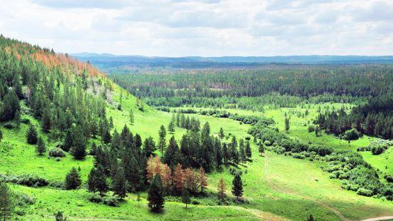 紅花爾基樟子松國家森林公園