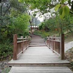푸저우 국가삼림공원 여행 사진