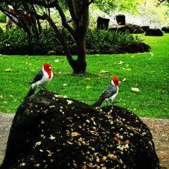 卡波拉尼公園用戶圖片