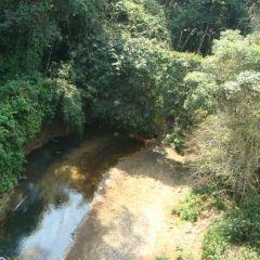 Jungle Trail User Photo