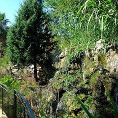 尼斯植物園用戶圖片