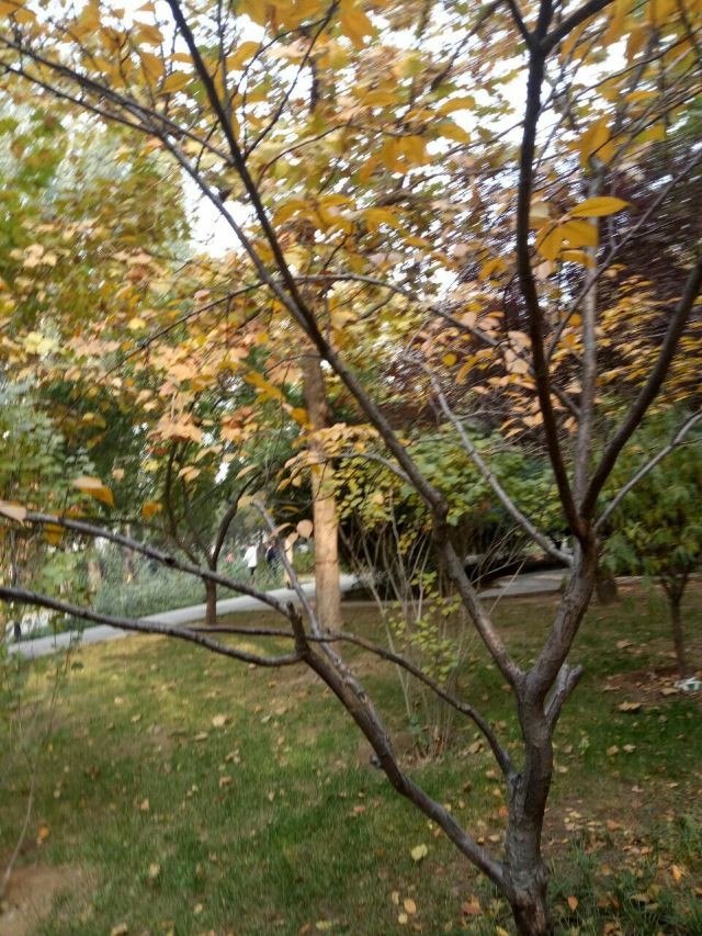 Shike Garden