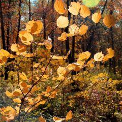 吉林舒蘭市森林公園用戶圖片