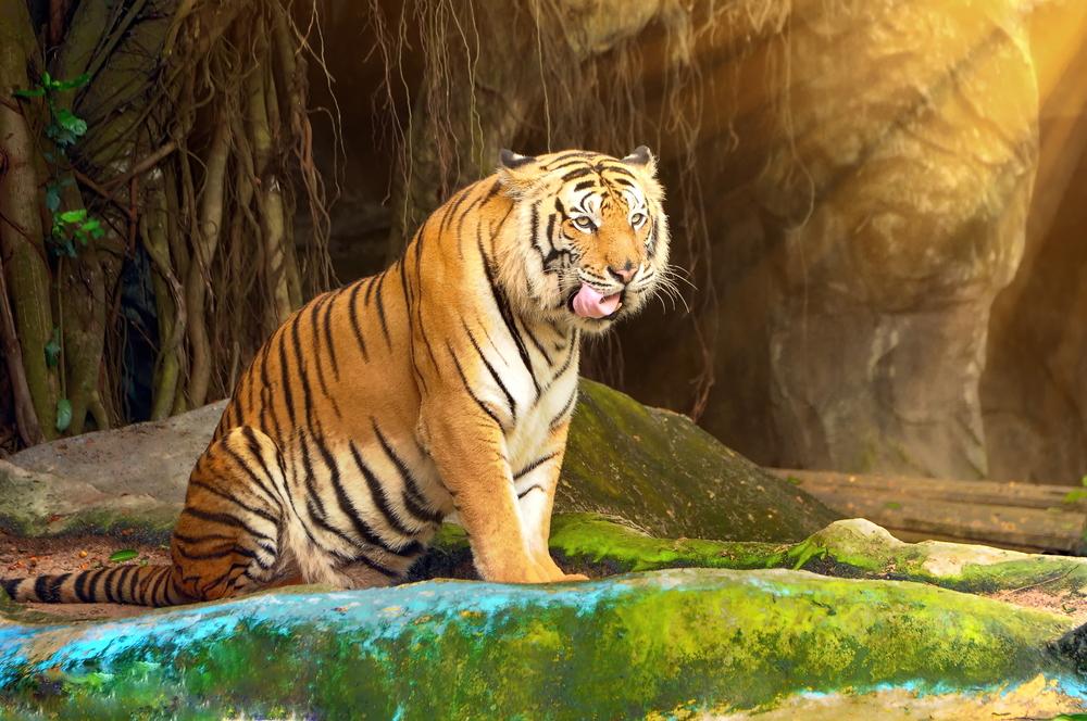ผืนป่าเขาเขียวและอาณาจักรสัตว์ป่า