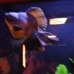 金魚寶殿用戶圖片